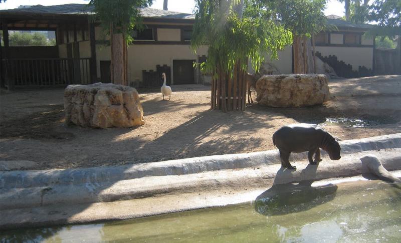 Лимассол Зоопарк Лимассола