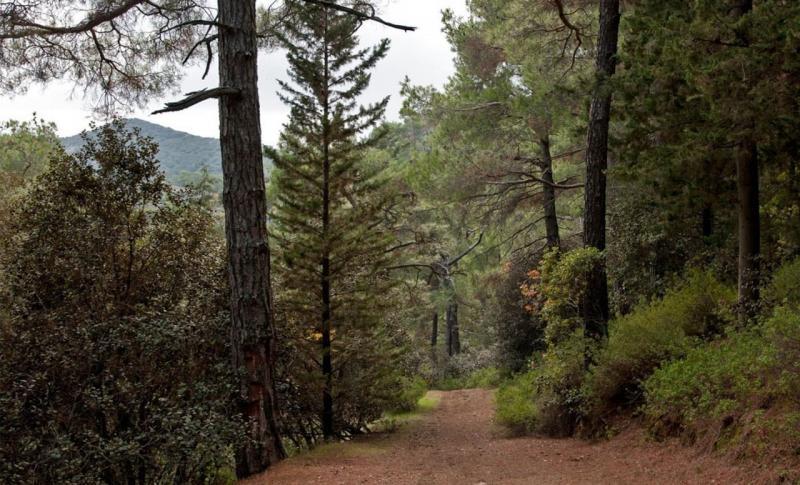 Айя-Напа, Лесной парк Каво Греко