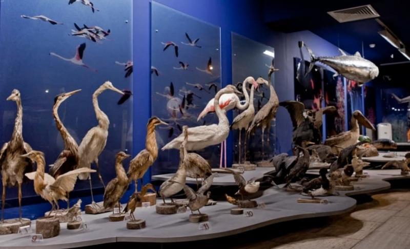 Айя-Напа, Музей моря Таласса