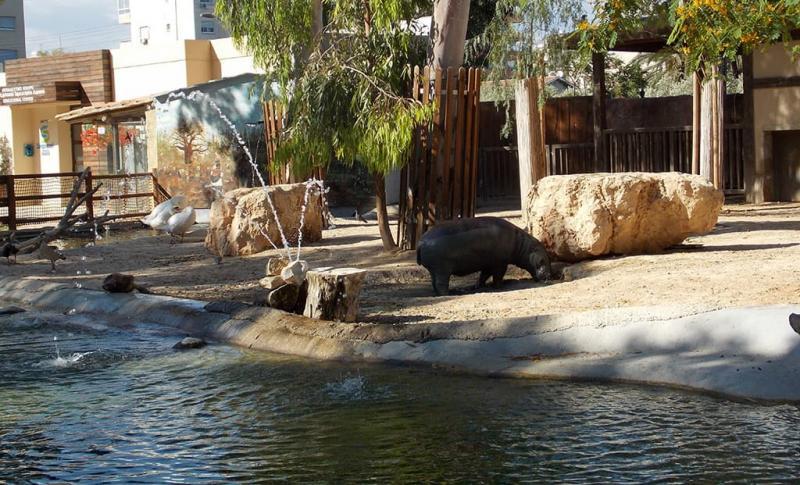 Лимассол для детей, Зоопарк «Limassol ZOO»