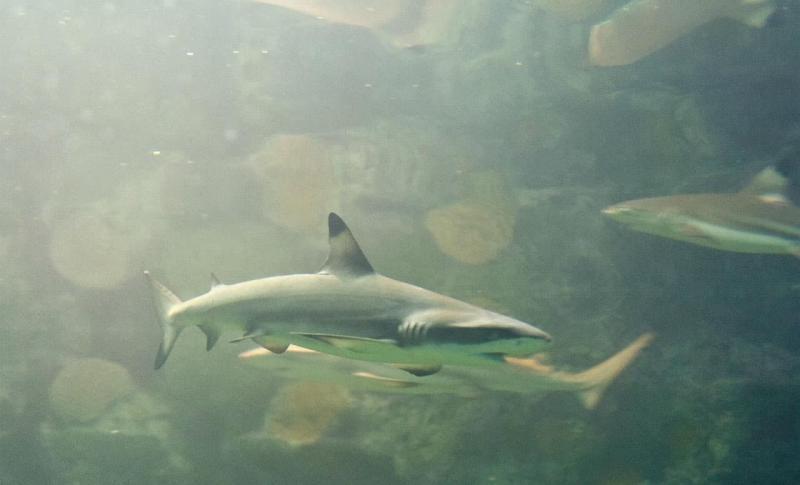 Кипр Айя-Напа Ocean Aquarium