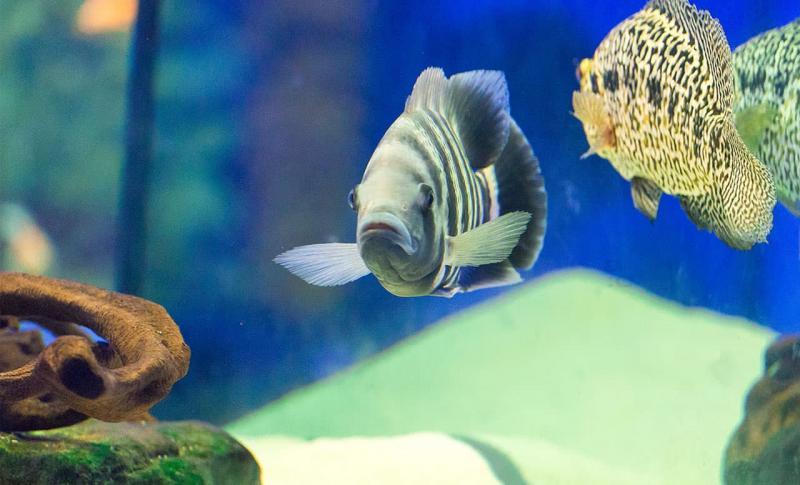 Протарас Ocean Aquarium