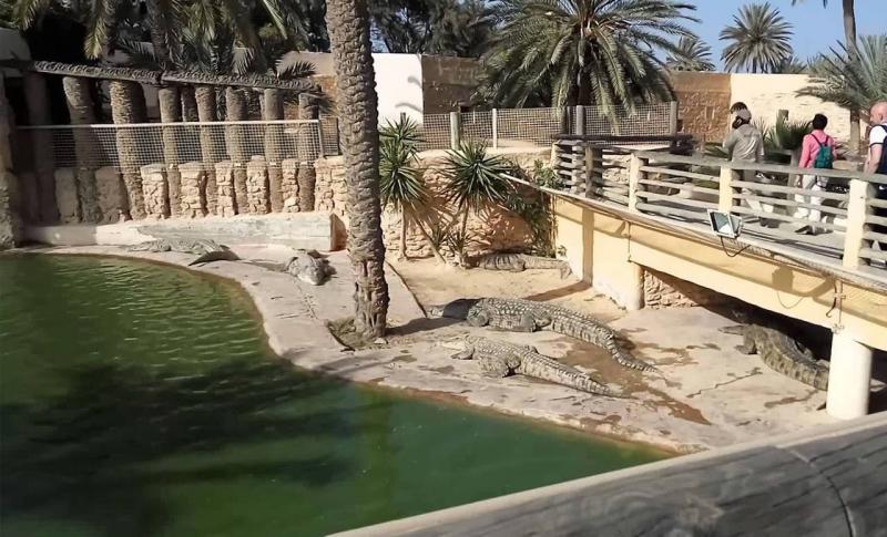 Джерба для детей, Ферма крокодилов