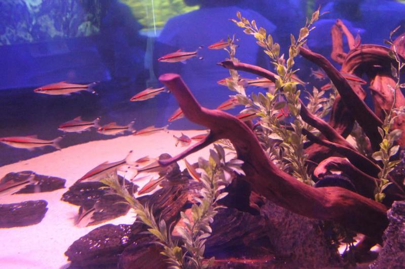 Протарас для детей, Океанический аквариум