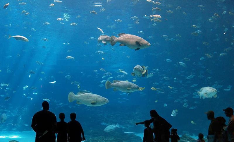 Протарас, аквариум, дети