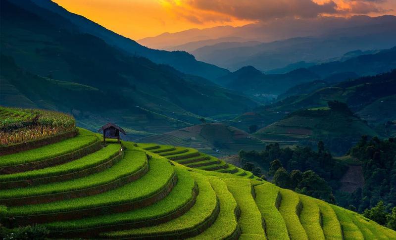 Вьетнам, Рисовые поля