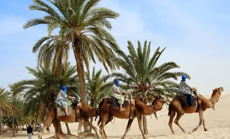 Тунис, Сафари в пустыне на верблюдах