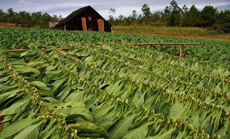 Куба Долина Виньялес