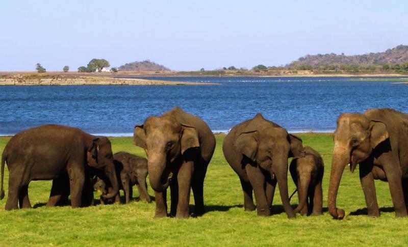 Где отдохнуть в декабре 2020 за границей - Шри-Ланка, Приют для слонов Пиннавела