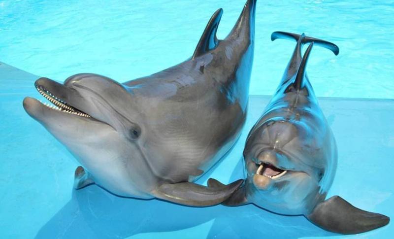 Феодосия для детей, Дельфинарий «Немо»
