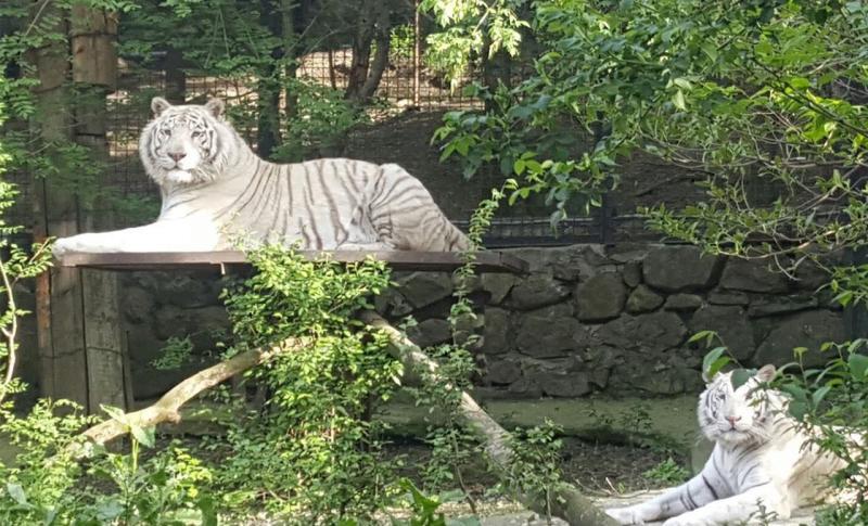Ялта для детей, Зоопарк «Сказка»