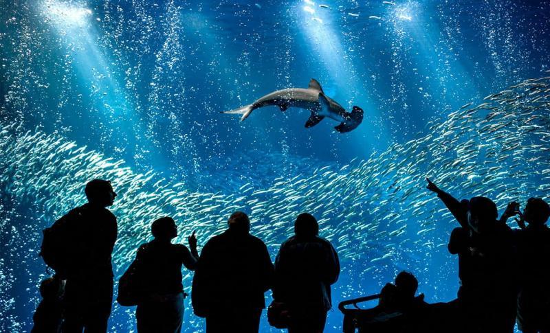 Кипр Айя-напа Океанариум Ocean Aquarium