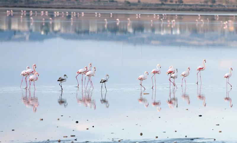Кипр Ларнака Озеро Ларнака
