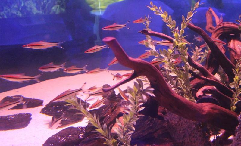 Кипр Протарас Ocean Aquarium