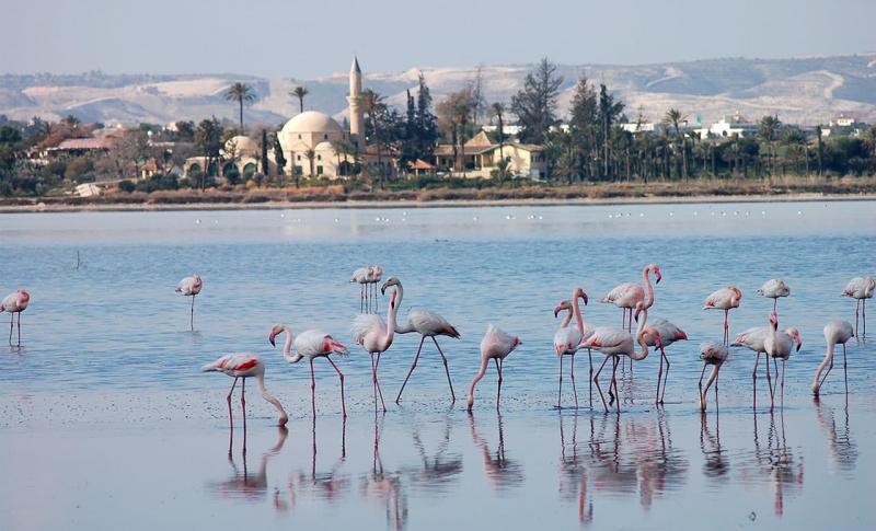 Ларнака, Фламинго на Соленом озере